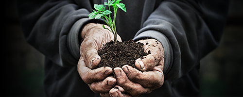 <p>The Future of Wealth Management: ESG Investing</p> banner image